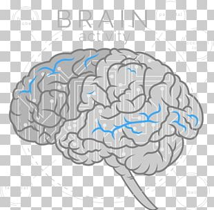 Brain Cerebrum Artificial Intelligence Neuroscience Neurofeedback PNG
