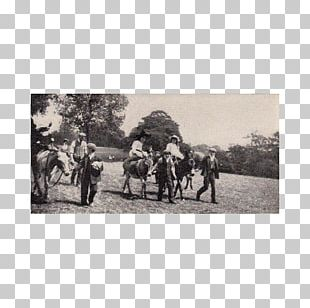 Pack Animal White Ranch PNG