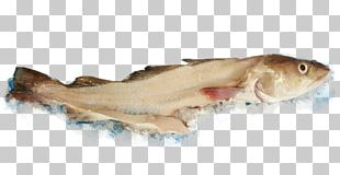 Whitefish Seafood Fish Products Atlantic Cod PNG