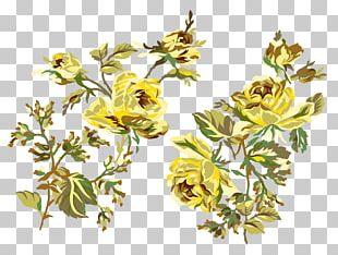 Beach Rose Flower Yellow Garden Roses PNG