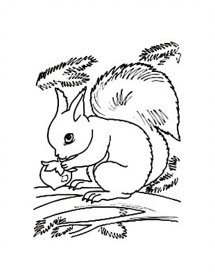 Flying Squirrel Coloring Book Red Squirrel PNG
