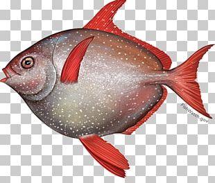 Oily Fish Lampris Guttatus Thunnus Seafood PNG