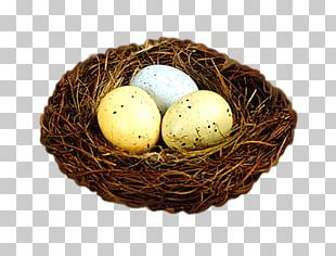 Nest Bird Egg Easter Bunny PNG