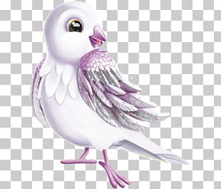 Owl Goose Cygnini Duck Bird PNG