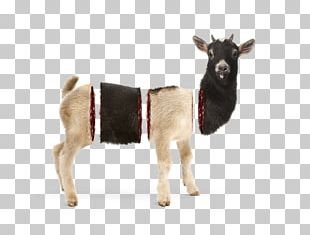 Goat Cattle Reindeer Animal PNG