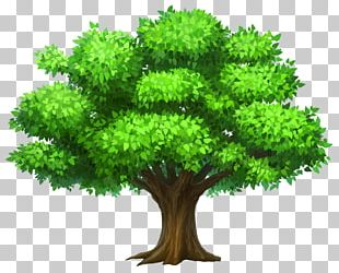 Tree Oak PNG
