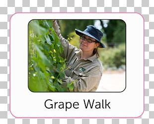 Bendigo Botanical Garden Tree Lawn PNG