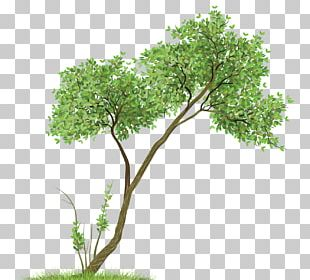 Paper Drawing Watercolor Painting Tree PNG