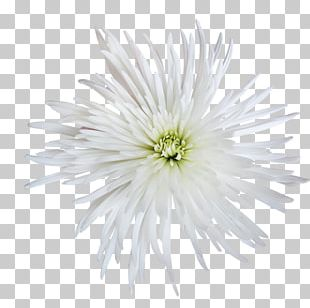 Cut Flowers Petal PNG