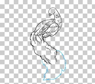 Drawing Pavo Line Art Sketch PNG