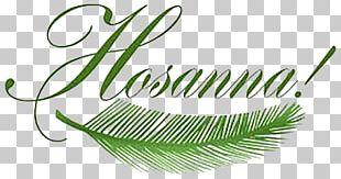 Palm Sunday Passion Sunday Holy Week Triumphal Entry Into Jerusalem PNG