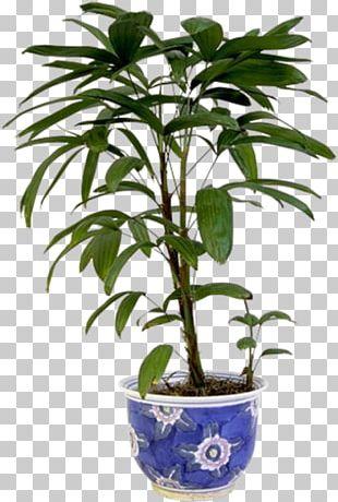 Plant Stem Houseplant Flowerpot PNG