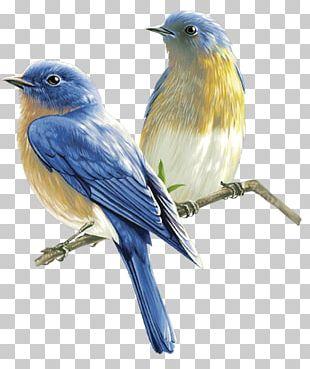 Bird PNG