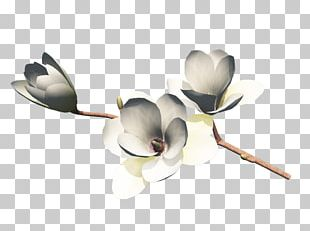 Flower Bouquet Petal Cut Flowers Nosegay PNG