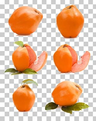Clementine Mandarin Orange Fruit Auglis Apple PNG