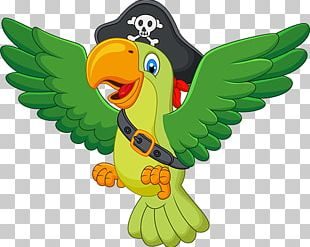 Parrot Cartoon PNG
