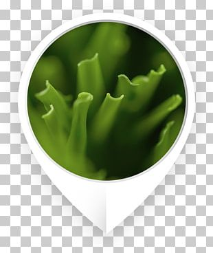 Green Shape Yarn Color Television Show PNG