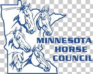 American Paint Horse Association American Quarter Horse Hackney Horse Minnesota PNG