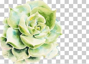 Drawing Succulent Plant Watercolor Painting PNG