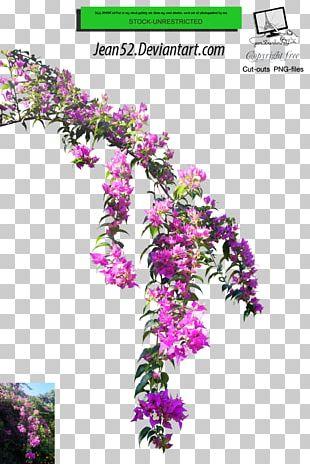 Flower Plant Floral Design PNG