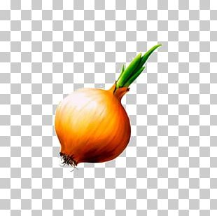 Onion Allium Fistulosum Garlic Shchi Vegetable PNG