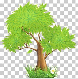 Tree Euclidean PNG