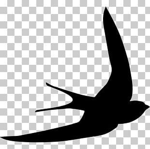 Bird Swallow Common Swift Swiftlet Shape PNG