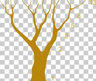 Árbol Del Tule Fibonacci Number Albero Di Fibonacci Golden Ratio PNG