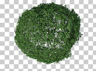 Leaf Vegetable Landscape Others PNG