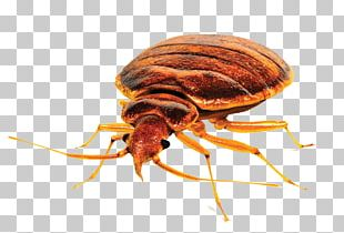 Insect Bed Bug Control Techniques Pest Control Bed Bug Bite PNG