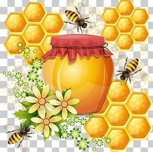 Western Honey Bee Honeycomb PNG