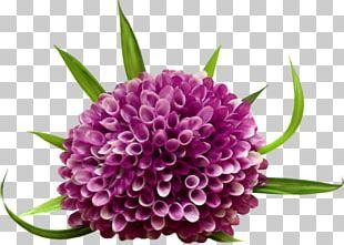 Purple Flower Arranging Painted PNG