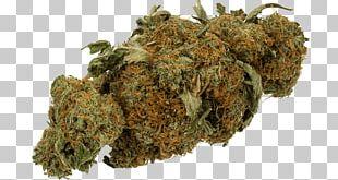 Medical Cannabis Haze Kush Cannabis Sativa PNG