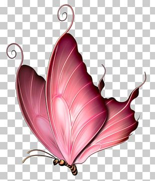 Butterfly Insect Pink Purple PNG