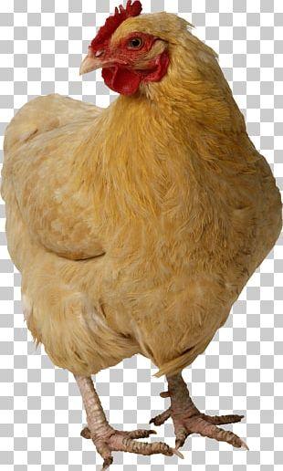 Chicken PNG