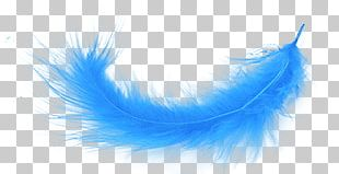 Blue Feather PNG