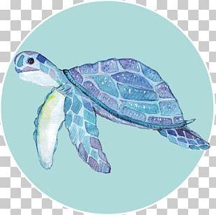 Loggerhead Sea Turtle Turtle Shell PNG
