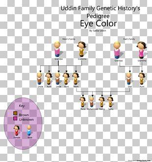 Pedigree Chart Eye Color Genetics PNG