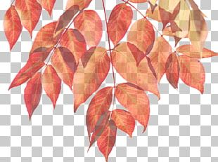 Autumn Leaf Color Autumn Leaf Color Infographic PNG
