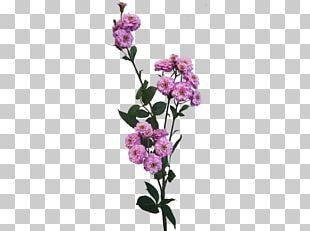 Cut Flowers Rose Flower Bouquet Plant Stem Pink PNG