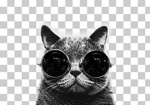 Cat Desktop Kitten Drawing PNG