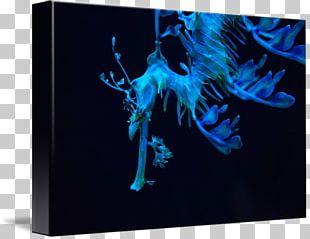 Graphic Design Desktop Computer Organism PNG
