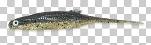 Perch Bait Oily Fish PNG