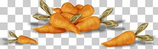 Carrot Vegetable Fruit PNG
