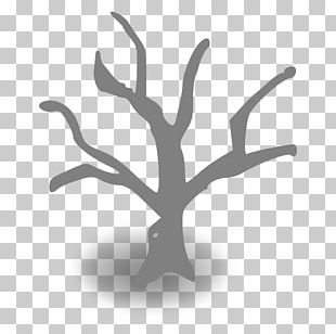 Branch Tree Trunk PNG