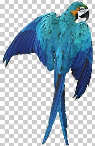 Parrot Bird Macaw PNG