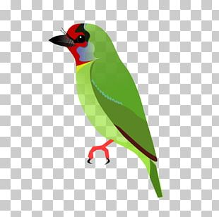 Beak Finches Feather PNG