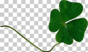 Saint Patrick's Day Graphic Design Shamrock PNG