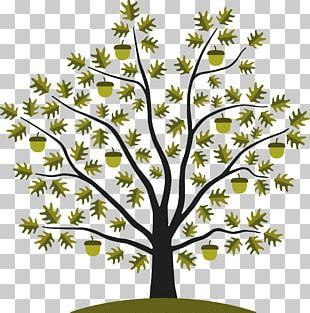 Acorn Tree White Oak Seed PNG