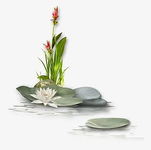 Lotus With Stone PNG